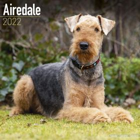 2018 AIREDALE