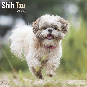 2019 SHIHTZU [pp097] - 1,560円